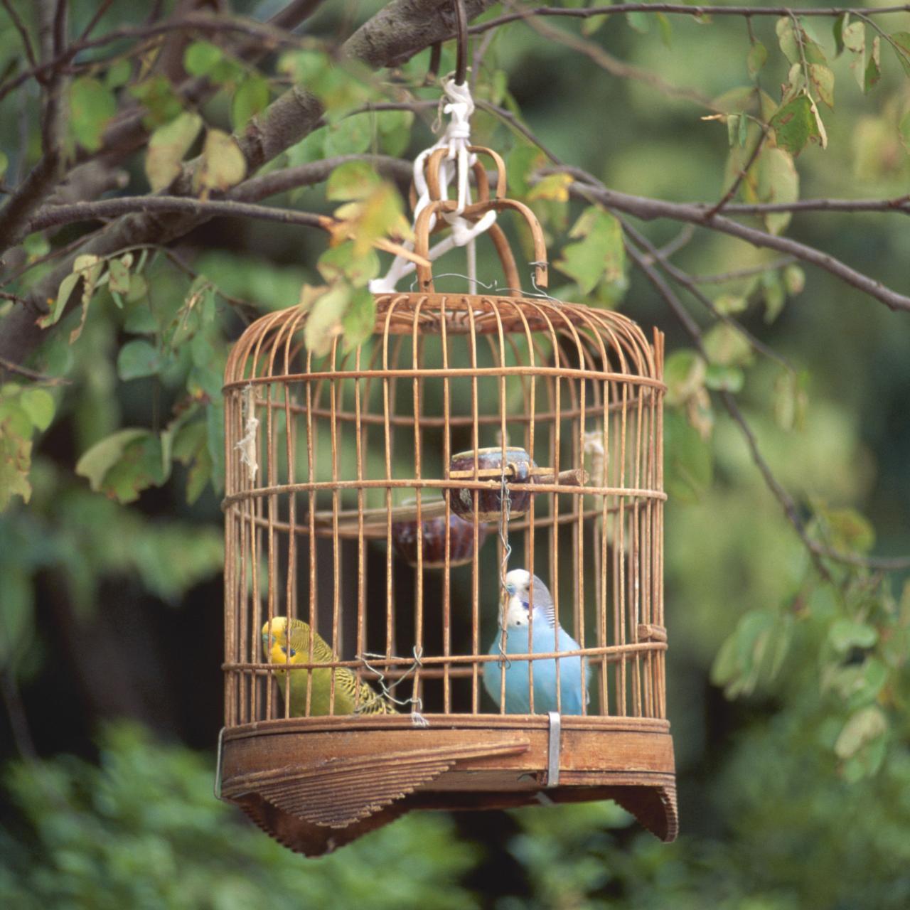 Возврат клетки для птиц