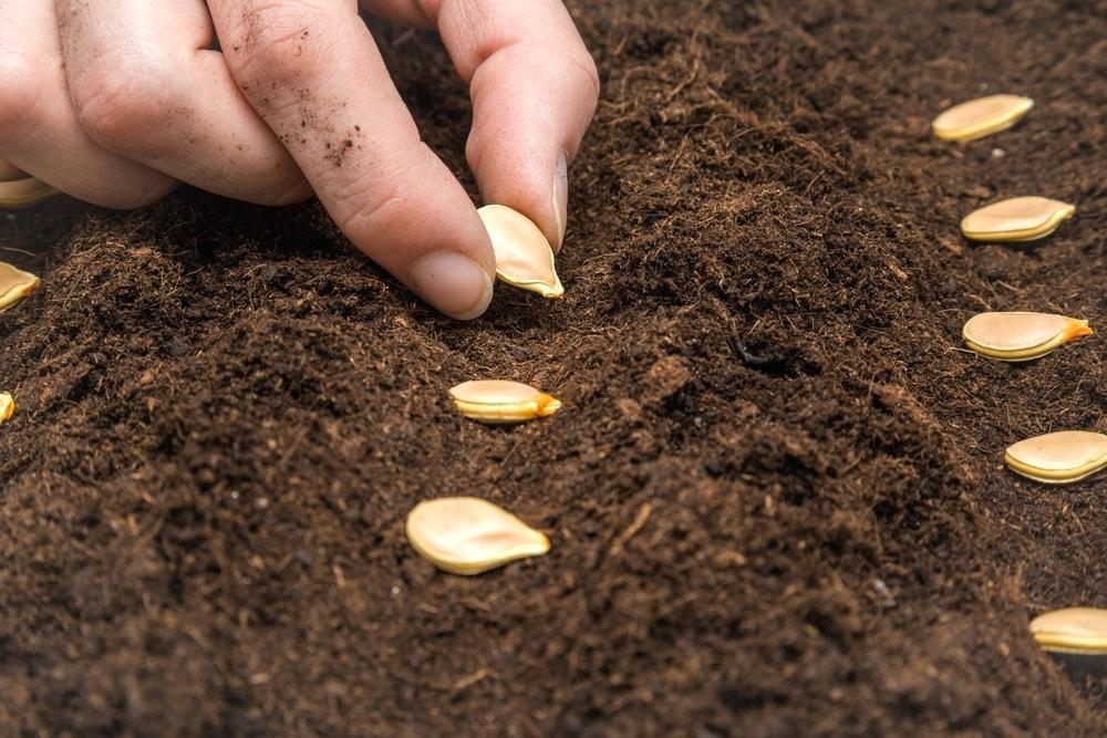 Возврат семян растений